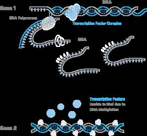 ما هو علم Epigenetics