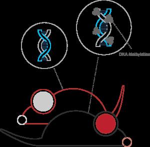 علم Epigenetics وتفعيل الجينات